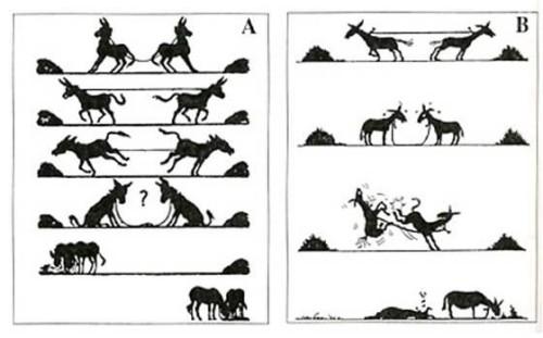 burros-conflicto